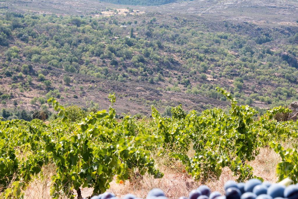 Paisaje de la DOP y las viñas de la zona