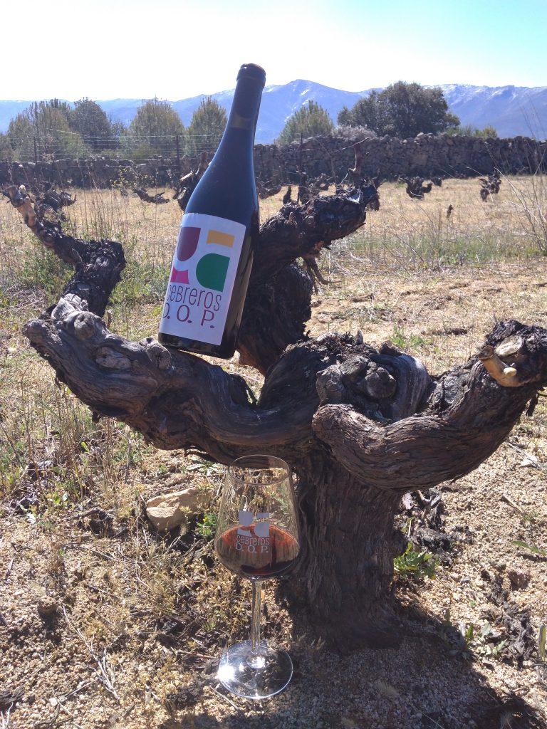 La Comisión Europea reconoce a Cebreros como Denominación de Origen Protegida de vinos